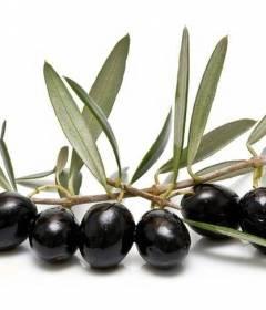 10 полезных свойств черной смородины изоражения