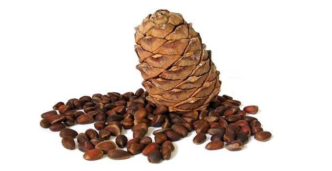 Чем полезен настойка на кедровых орехах