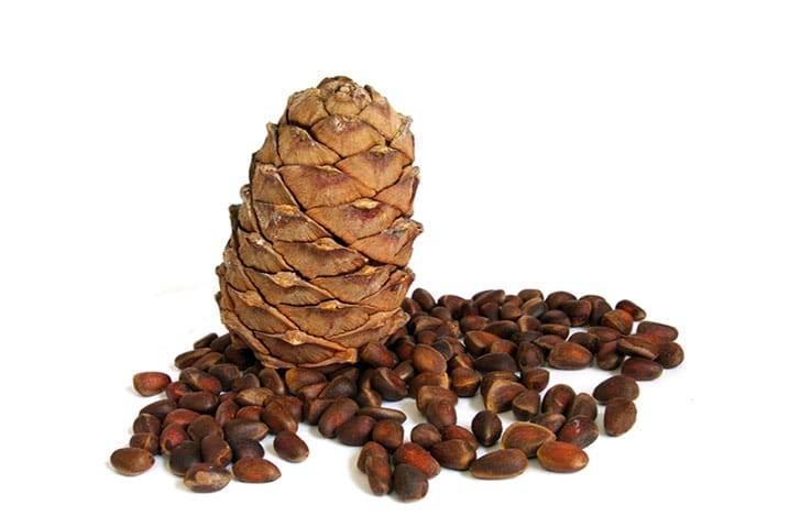 кедровые орехи для щитовидной железы