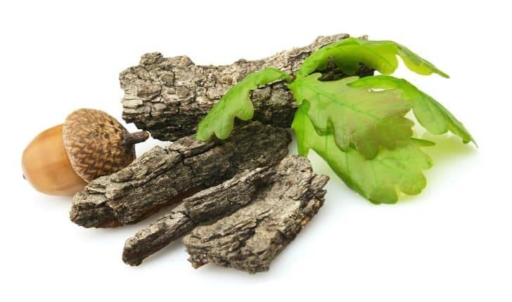 Кора дуба — 10 лечебных свойств, рецепты приготовления, применения и противопоказания