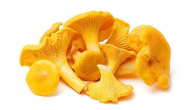 чем полезны лисички грибы для человека