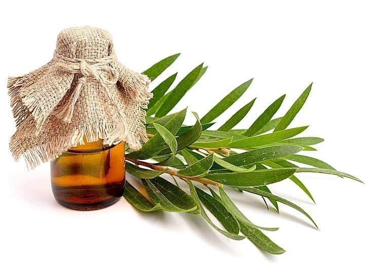 Масло чайного дерева: 9 лечебных свойств и применение