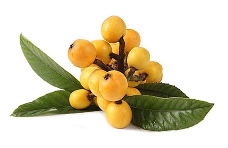 Мушмула — 9 полезных свойств и противопоказания фрукта