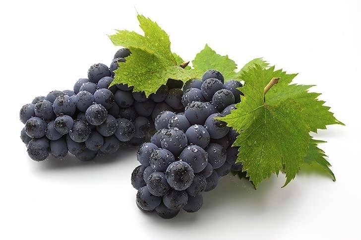 Полезные свойства синего винограда